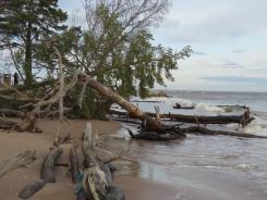 Koki Kolkasragā turpina neizturēt viļņu uzbrukumu 01.01.2020. B.Šuvcānes foto
